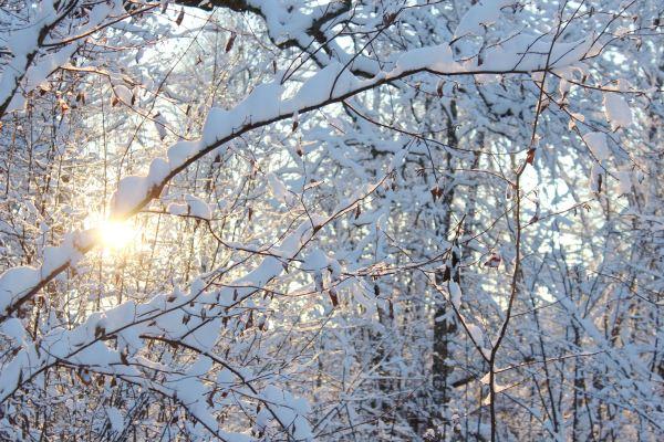Vinterkärlek - reaktionista.se